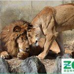 """<span class=""""title"""">地域応援するふるさと納税クラウドファンディング 「日立市かみね動物園 動物たちが幸せに暮らし、お客様は非日常空間である動物園を思いっきり楽しみ、学ぶ!そんな動物園にしたい 」 寄附金額:6,000円~</span>"""